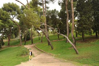Madrid, bosque urbano