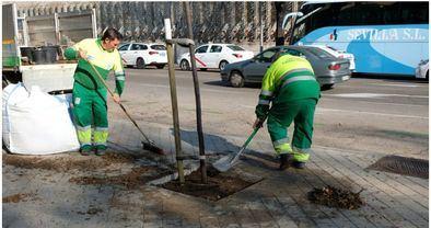 El área de Medio Ambiente ha comenzado la replantación de alcorques vacíos.