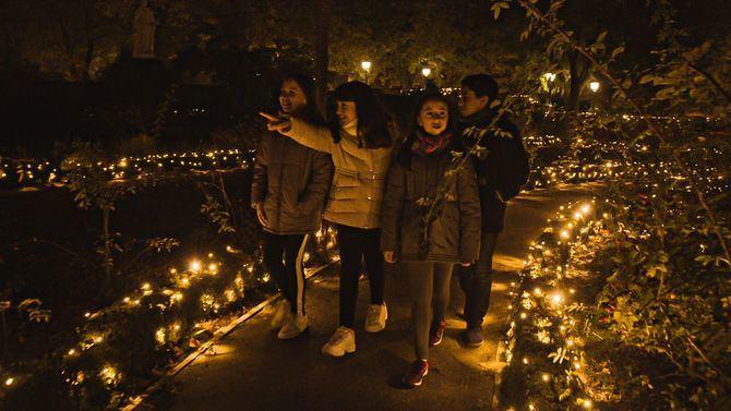 Se trata de una sorprendente propuesta de ocio seguro al aire libre, que abre sus puertas desde el 17 de noviembre de 2020 hasta el 10 de enero de 2021 en el Real Jardín Botánico de Madrid.