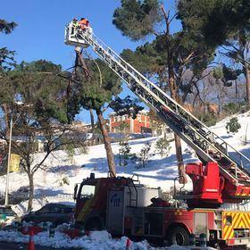 Cierran indefinidamente todos los parques de Madrid, ante el riesgo de caída de árboles