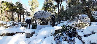 En un primer análisis, el jefe de la Unidad de Jardinería y Arbolado del RJB-CSIC, Mariano Sánchez, ha señalado que la borrasca ha derribado ramas fundamentalmente de especies perennifolias que no pierden la hoja en invierno.