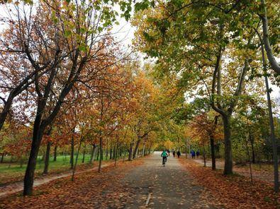 En la Casa de Campo están operativas zonas como el paseo del Robledal, que conduce al Parque de Atracciones; la carretera de Zarzón, que lleva al Zoo y diversos espacios del gran pulmón de Madrid.