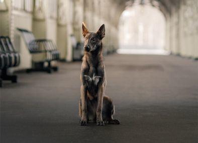 El estudio constata que el número de perros y gatos recogido por las protectoras españolas durante 2020 sin identificación sigue siendo muy elevado.