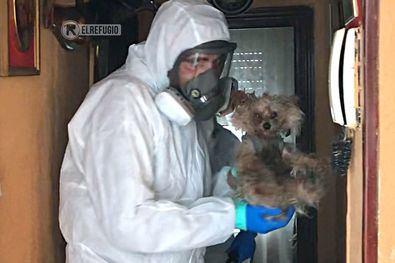 El matrimonio, residente en San Blas y hospitalizado por Coronavirus, solicitó ayuda a la protectora El Refugio, porque sus dos perros se habían quedado solos en casa, sin posible atención por parte de nadie.