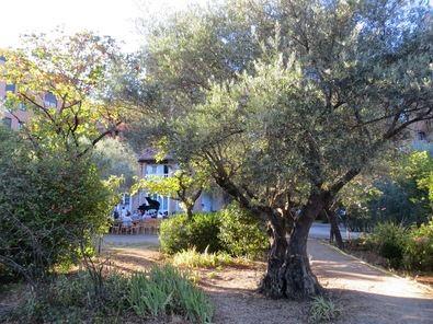 En la actualidad el olivar es sede de las fundaciones Ramón Menéndez Pidal y Olivar de Castillejo, que organizan numerosas actividades culturales.