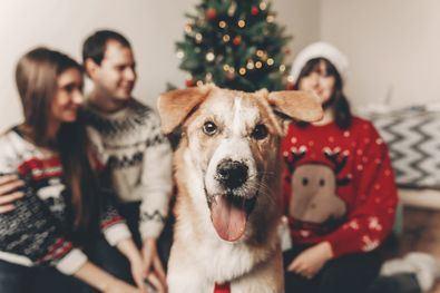 En España, más de 300.000 animales domésticos, de los cuales el 30% de los casos se produce en los primeros meses del año debido a regalos navideños.