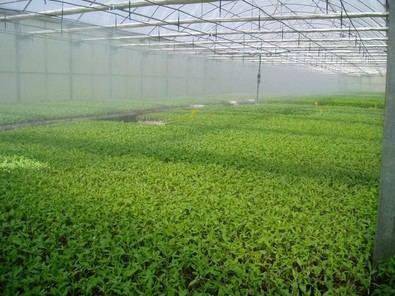 Plantones para la agricultura regional