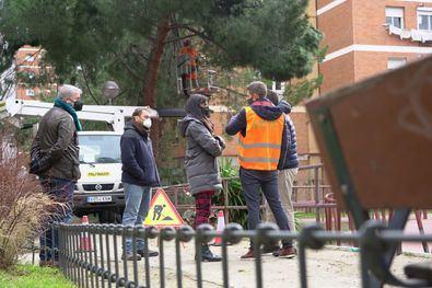 La vicealcaldesa ha recordado que Madrid tiene muchos árboles de hoja perenne, como los pinos, que han sido los más afectados.