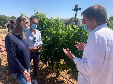La D.O. Vinos de Madrid cuenta con más de 3.000 viticultores y 58 bodegas repartidas en 24 municipios de la región. Este sector estratégico ha aprovechado la crisis del coronavirus para abrir nuevos canales de comercialización como la venta 'online'.
