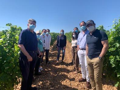 El Gobierno regional apuesta por el enoturismo para apoyar la recuperación del sector del vino madrileño. Los madrileños y visitantes de la región pueden elaborar sus rutas enoturísticas a través de la web www.madridenoturismo.org.