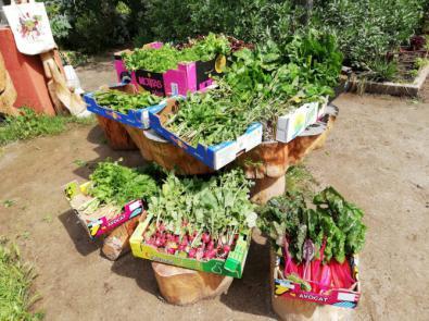 De los huertos urbanos de Retiro han salido docenas de cajas de verduras y hortalizas para repartir.