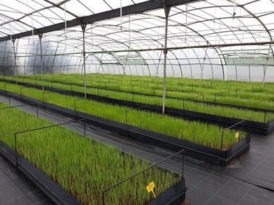 La Comunidad de Madrid ofrece a los agricultores 500.000 plantones de variedades hortícolas autóctonas, que se pueden solicitar a través de la web oficial de la Comunidad de Madrid, hasta el 31 de marzo.