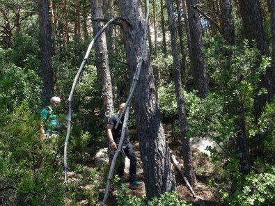 Reforesta considera que la gestión de nuestras masas forestales es vital para mantener bosques sanos.